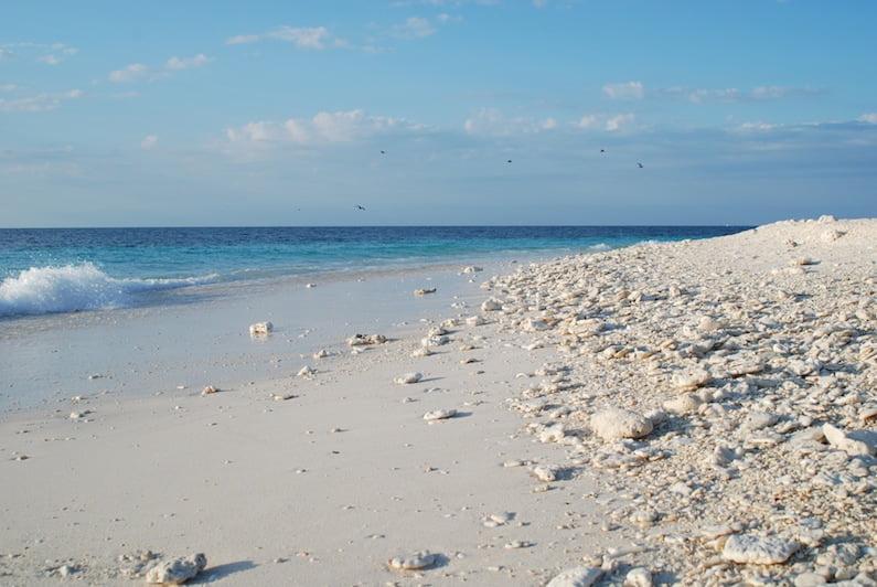 Beach, Wilson Island (2)