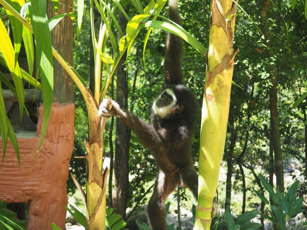 Monkey in Khao Sok