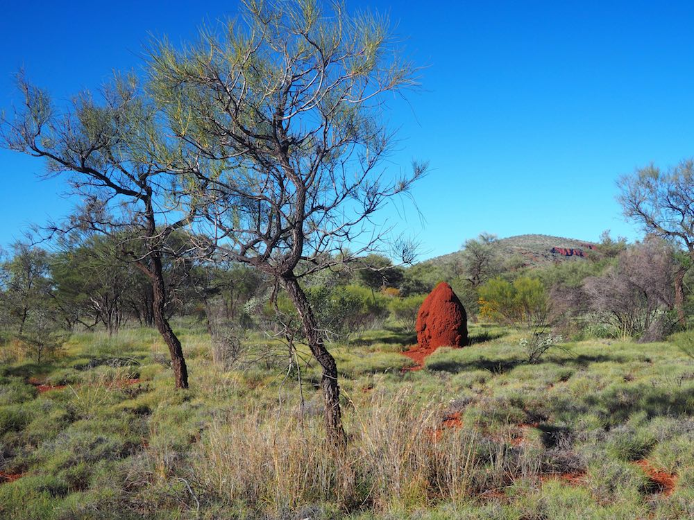 A termite mound beside the footpath