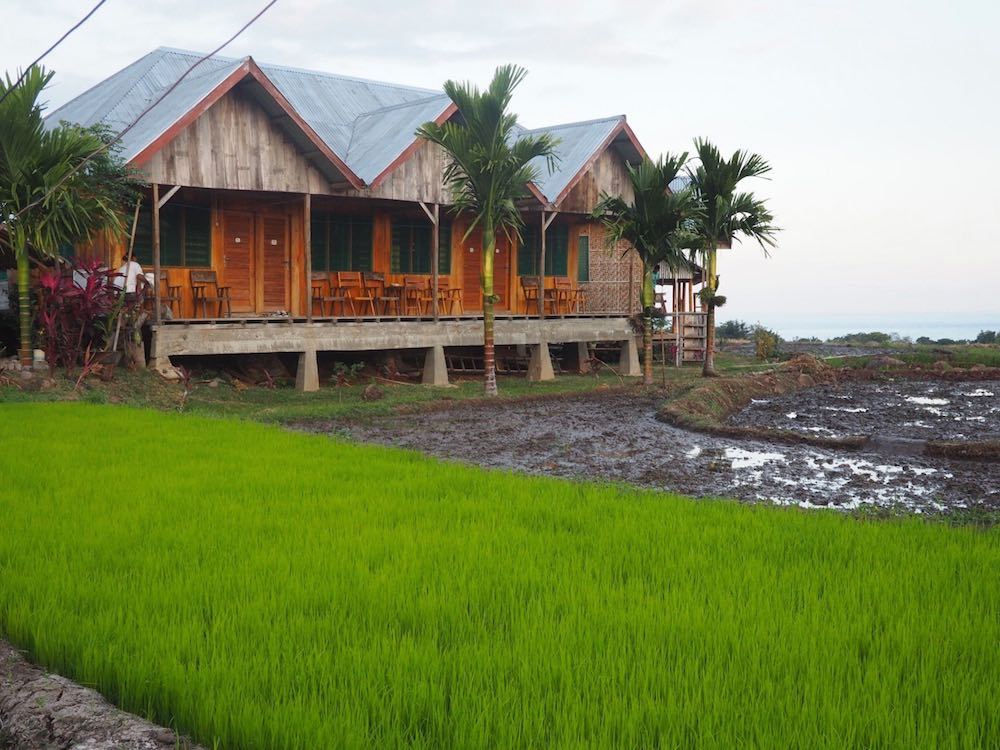 Martin Homestay surrounded by rice fields