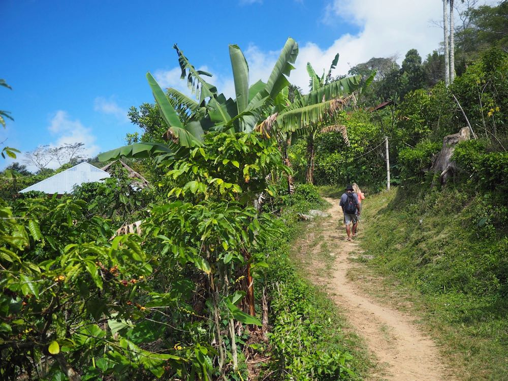 Nicky trekking to Wae Rebo