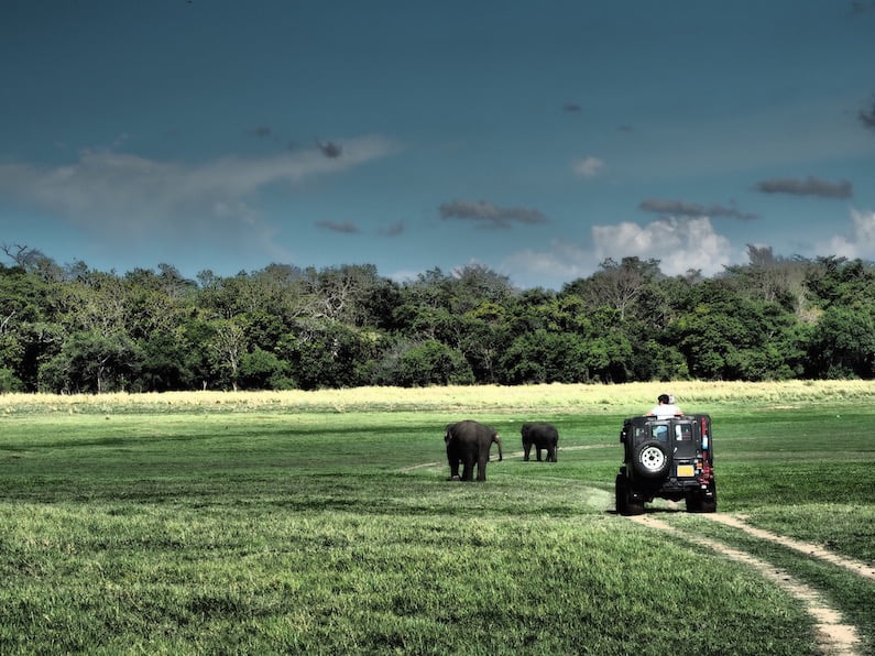 Two elephants with jeep