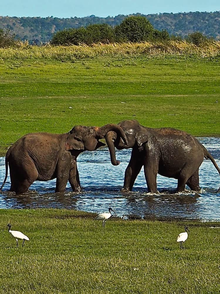 Two elephants playing in a pool