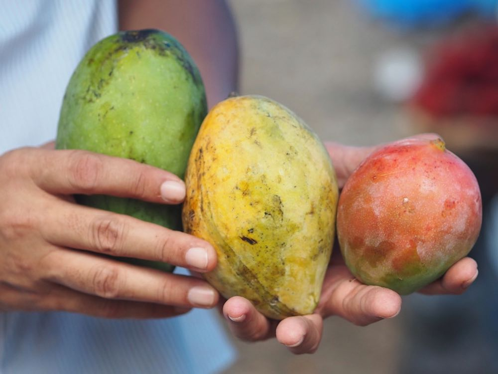 Three mangoes - green, yellow, red