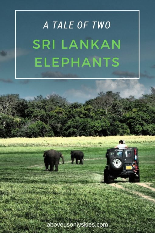 A tale of two Sri Lankan elephants