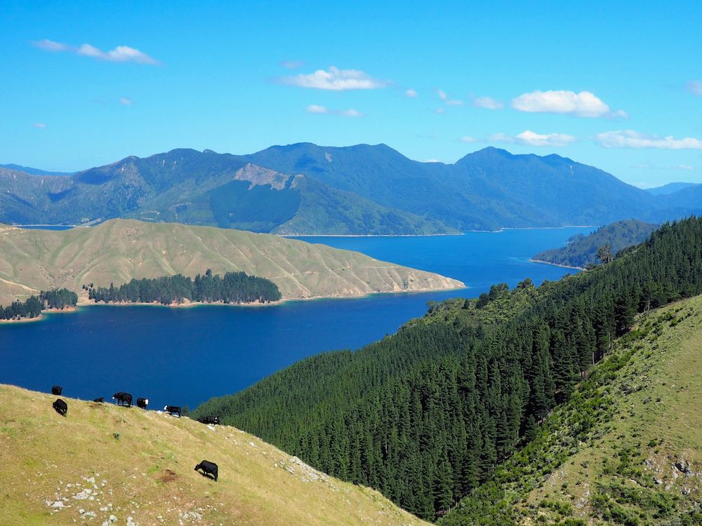 View of Marlborough Sounds en route to French Pass