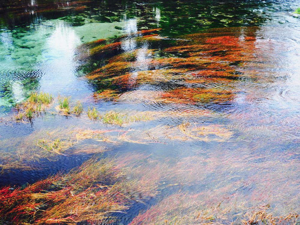 Red and green colouring at Waikoropopupu Springs