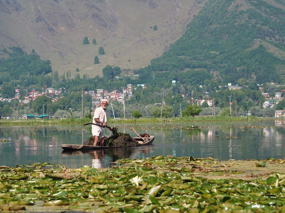 A fisherman on Dal Lake, Srinagar
