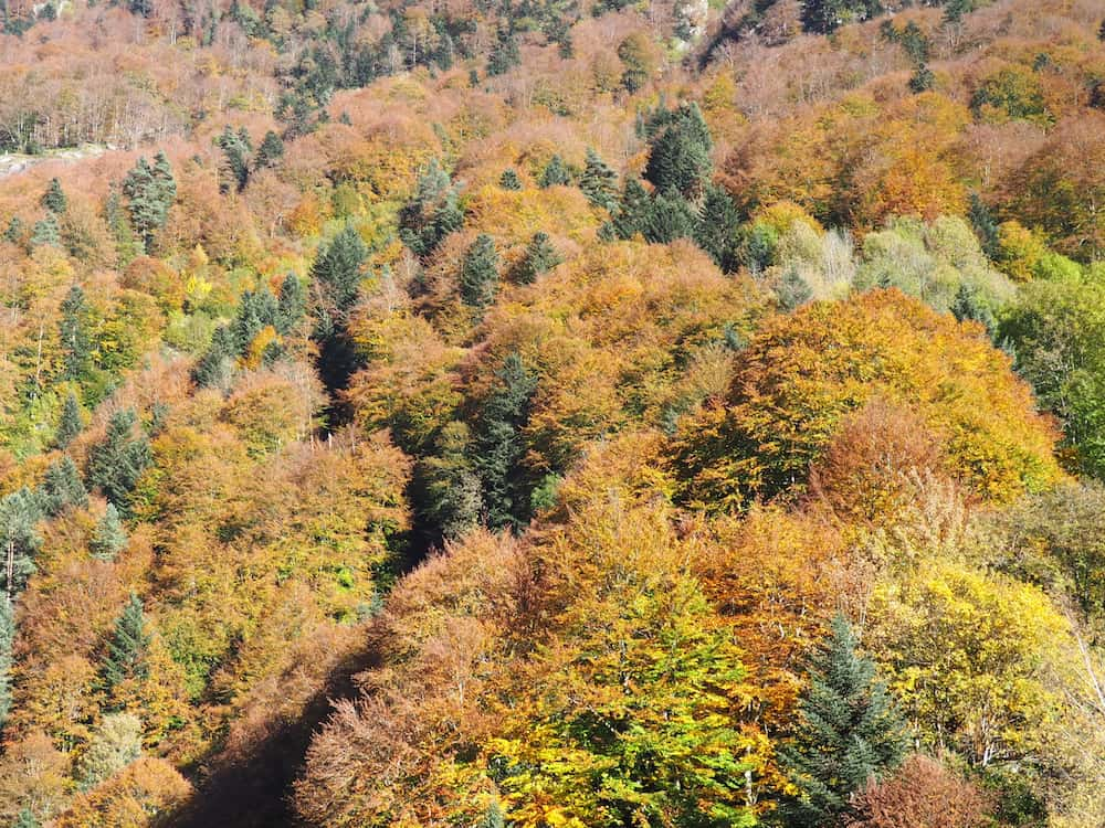 The French Pyrenees - Autumn colours at the Pont d'Espagna