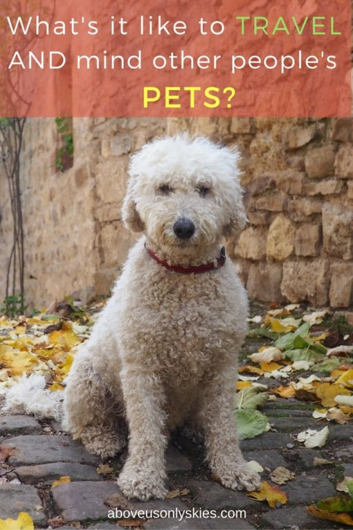 Our thoughts on combining travel with pet sitting