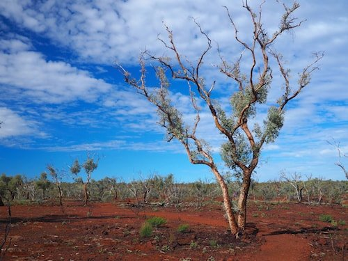 A Swag, A Dingo And The Australian Outback