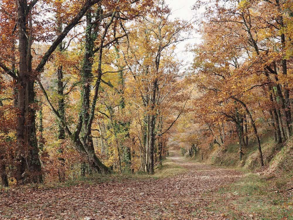 Autumn leaves in Tarn