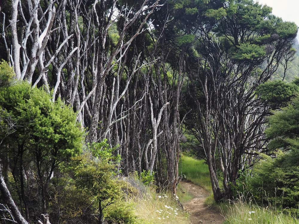 Trees on the Coromandel Coastal Walkway