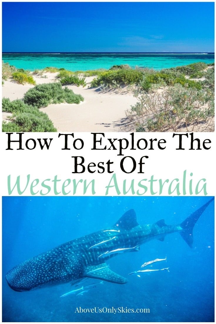 Spider-walk through gorges, swim with whale sharks and fall asleep to the sound of howling dingoes as you explore Western Australia on our 21-day road trip #westernaustraliatravel #whalewatching #roadtripdestinations #whales #australiatravel #perth #oceania #westernaustralia