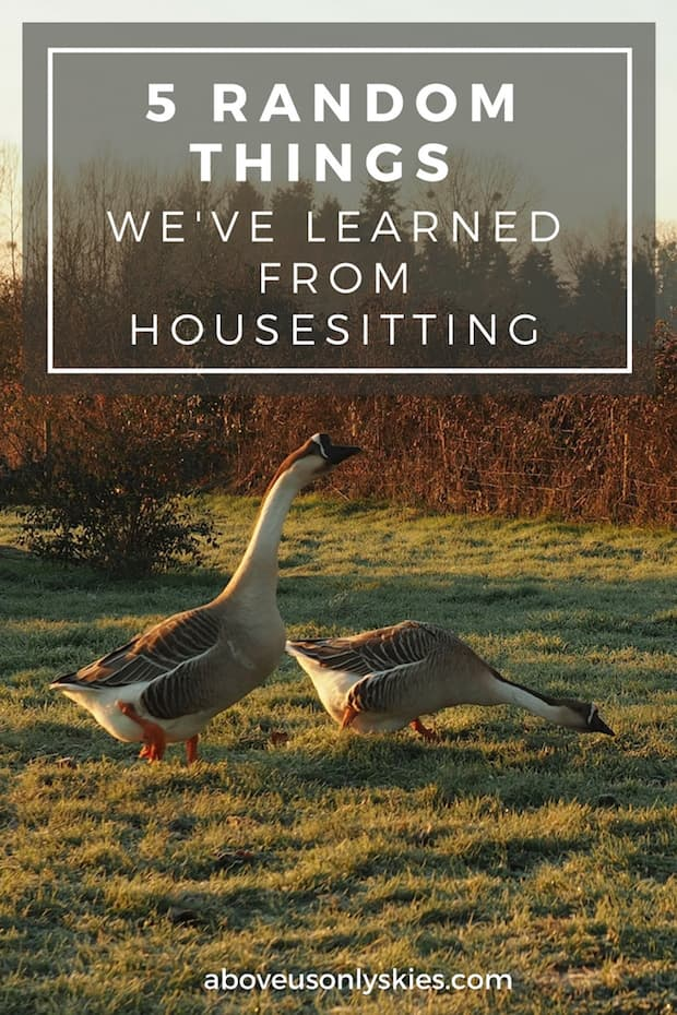 From flooded bedrooms and being locked out of the house to forever regretting teaching the parrot a new phrase - here are the top five lessons we've learned from housesitting