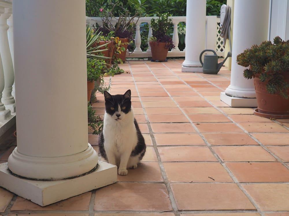 Oscar in Tortola