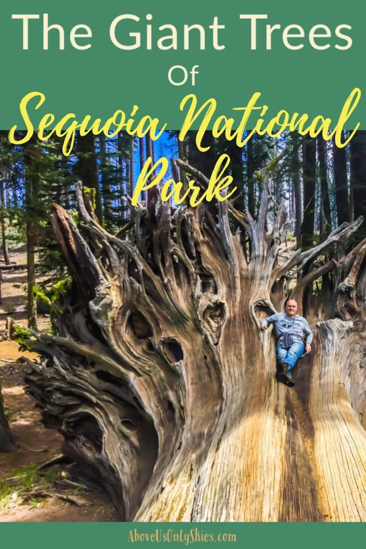 Home to the world's largest tree, California's Sequoia National Park is truly a Land Of Giants - here's our guide on how to see the best of what it has to offer #travelUSA #SequoiaNationalPark #RoadTripUSA #CaliforniaTravel #USANationalParks