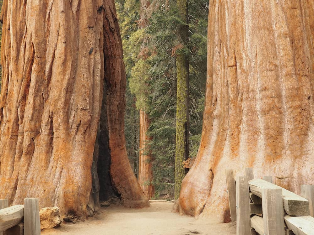 The Twins, Sequoia National Park