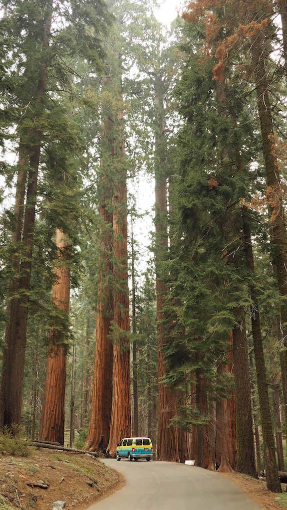 Giants Forest, Sequoia National Park