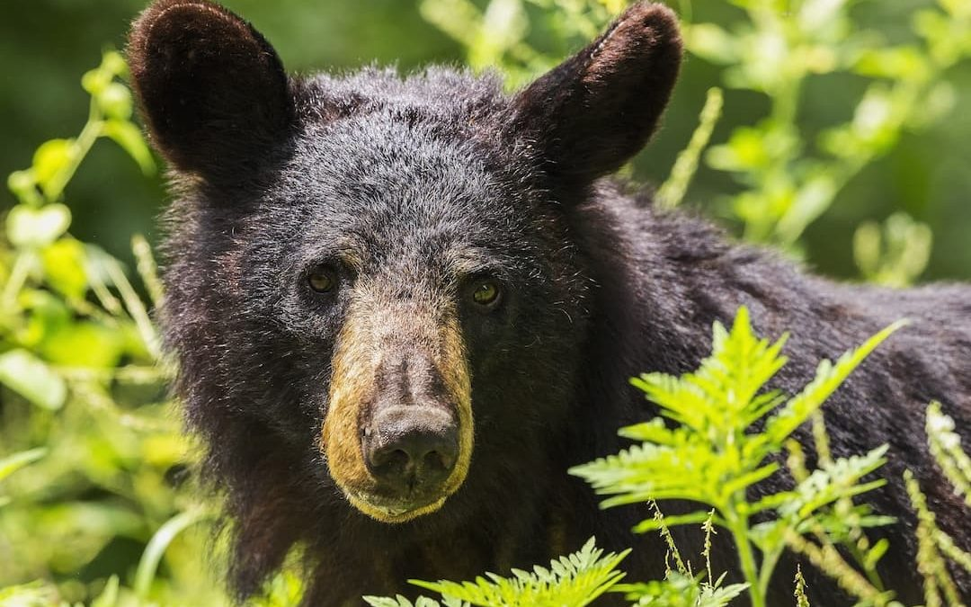 Why Using A Bear Box Is A Matter Of Life And Death