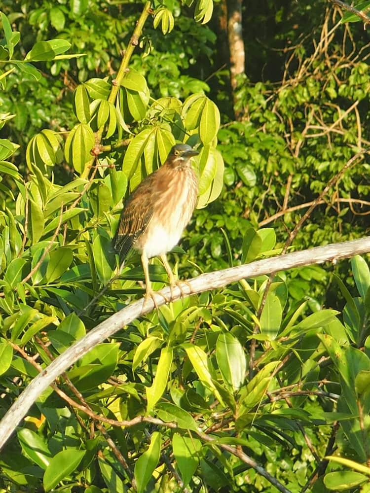 Bird in Tortuguero National Park