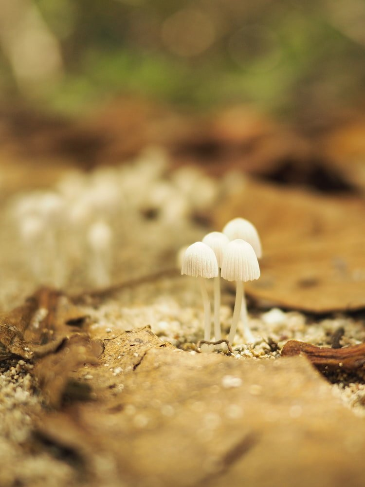 Mushrooms in Cahuita National Park