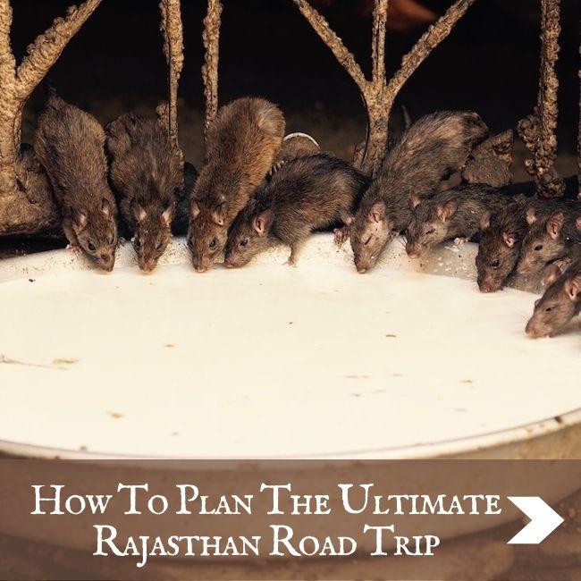 INDIA - Rajasthan Road Trip