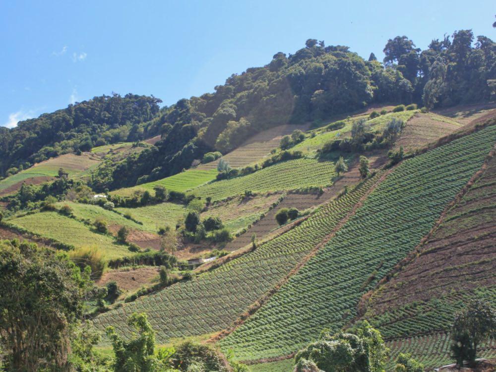 Hillsides near Cerro Punta