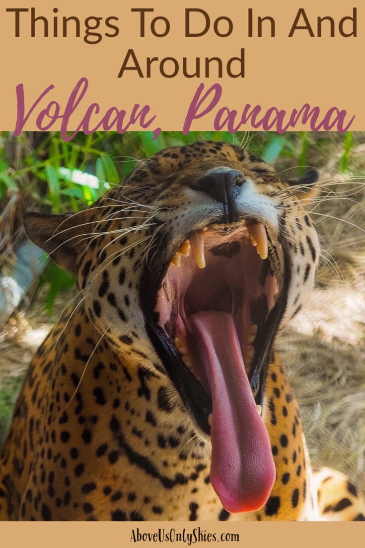 Volcan in the Chiriqui Province, Panama is a quiet, romantic town set in the foothills of Mount Baru offering fantastic hikes, glorious views and some of the best coffee in the world. Just an hour's drive from Boquete, check out our perfect guide. #mountbaru #volcanbaru #boquete #geishacoffee #sloths