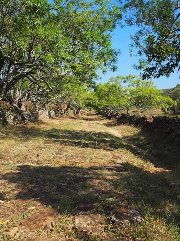 El Camino Real - footpath down to Guane
