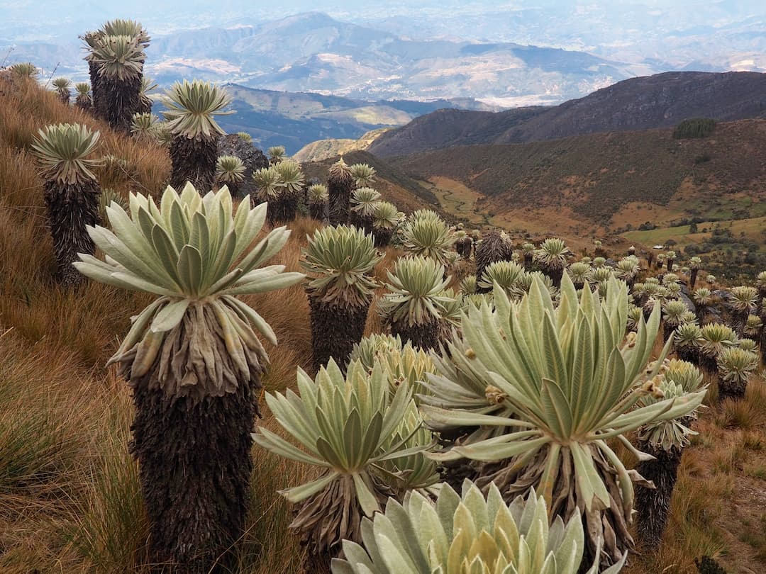 HOW TO EXPLORE MONGUI AND THE WORLDS MOST BEAUTIFUL PARAMO