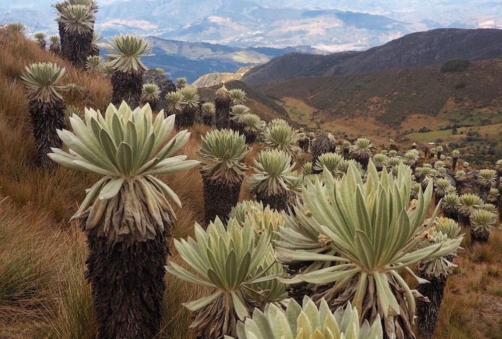 How To Explore Mongui And The World's Most Beautiful Paramo