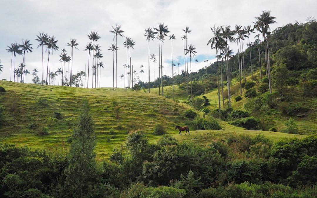 Salamina & The Samaria Valley – Colombia's Best Kept Secret