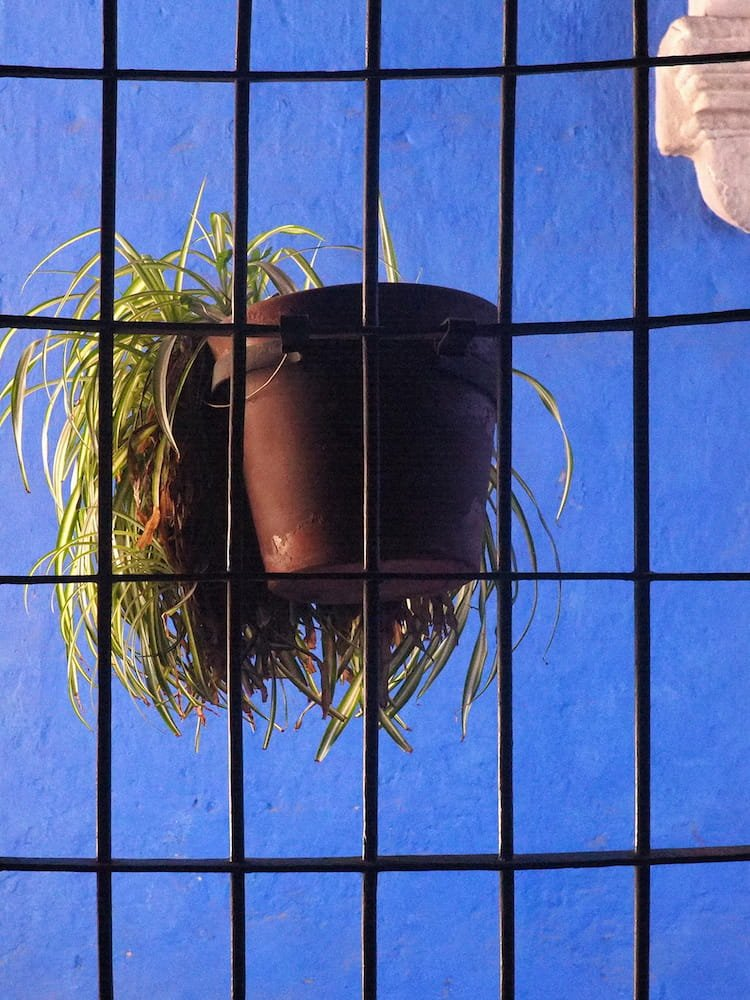 A hanging basket in front of a blue wall