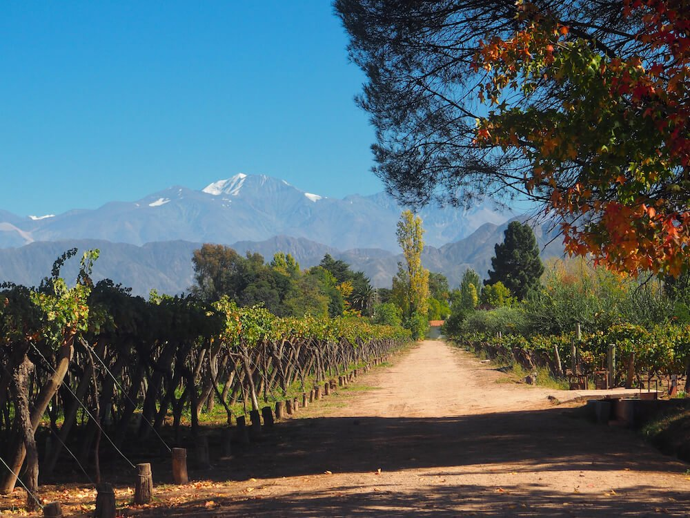 View from Kaiken Vineyard