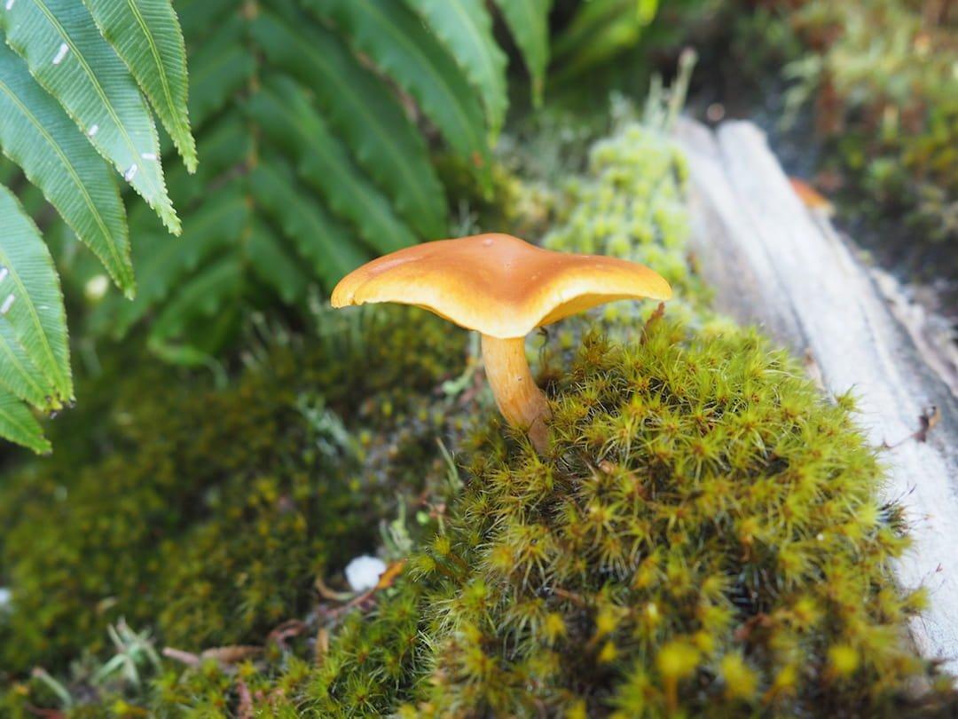 Cascadas Escondidas - mushroom