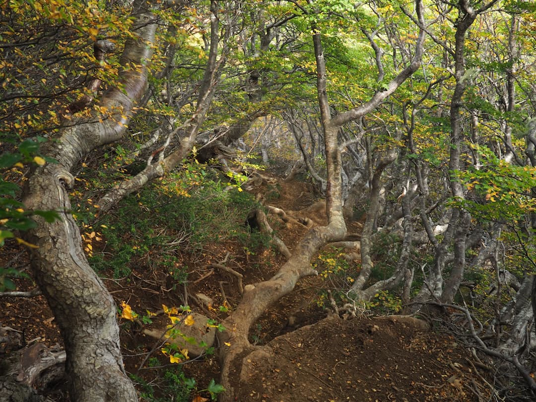 San Sebastian Trail - steep ascent through the woods