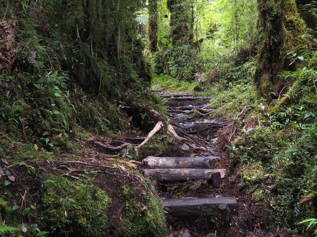 Cascadas de los Escondidas - woodland trail