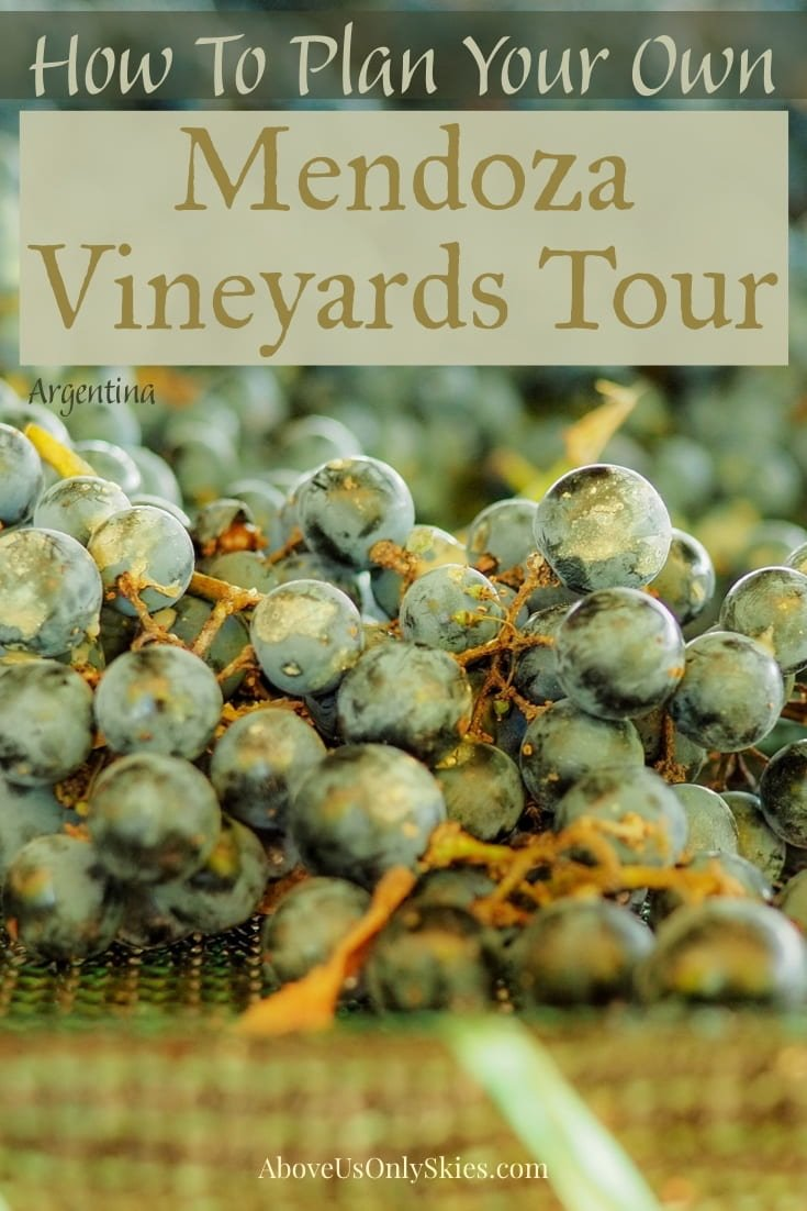 There are many companies offering tours to the Mendoza vineyards, but it's just as easy to organise your own at much less cost - here's how and where to go #malbec #mendoza #argentina #argentinatravel #winetours #winetasting #winetastingevents #winetastingexperience #argentinian #southamericatravel #renacer #vineyard #vineyards #travelaroundtheworld
