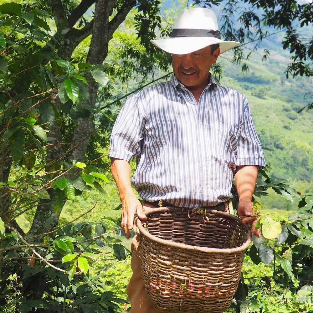 A man holding a basket of coffee beans in the jungle