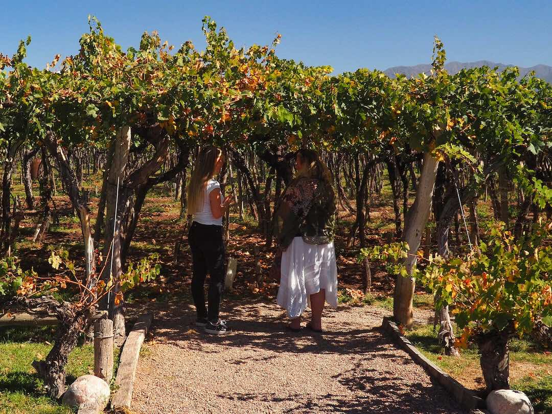 Two women talking under a canopy of vines