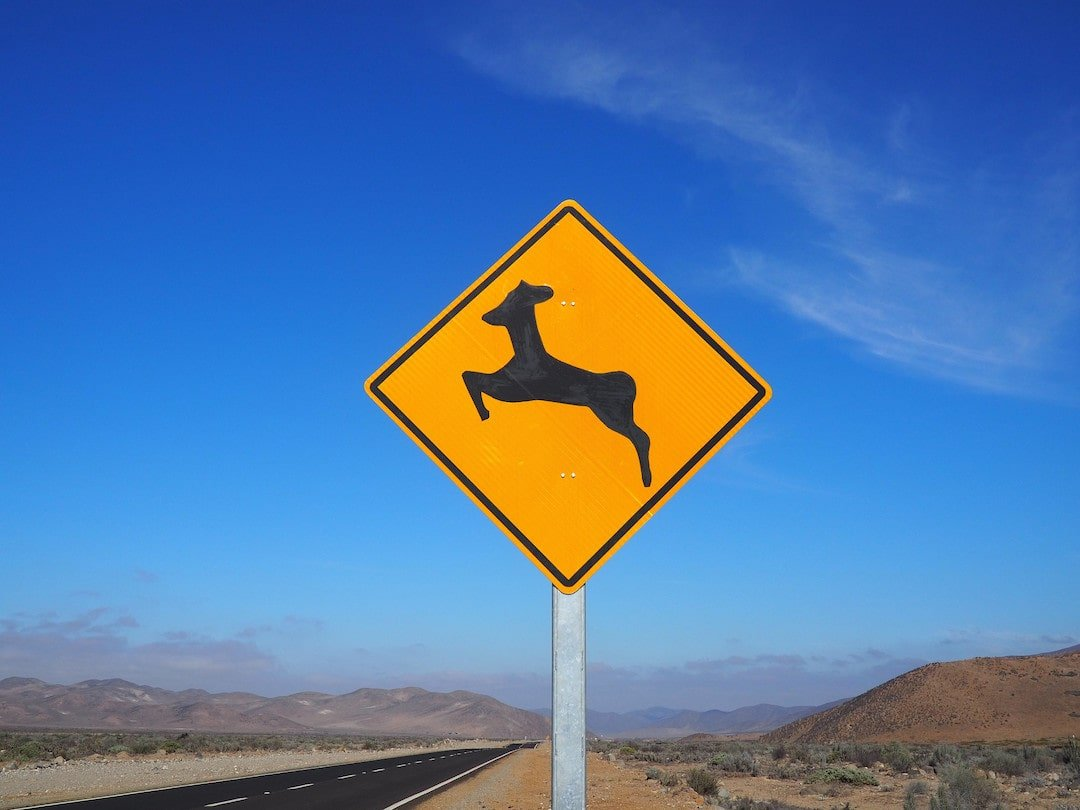 A yellow road sign with an image of a vicuna to warn drivers of wildlife crossing the road
