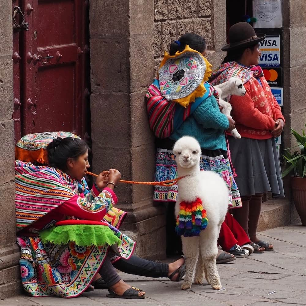 Three brightly dressed woman hold a baby alpaca on a lead