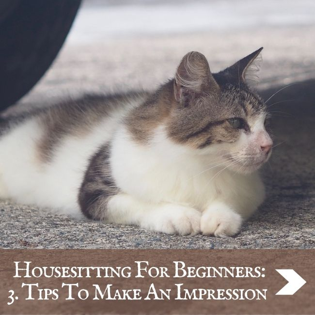 HOUSESITTING - Make an impression