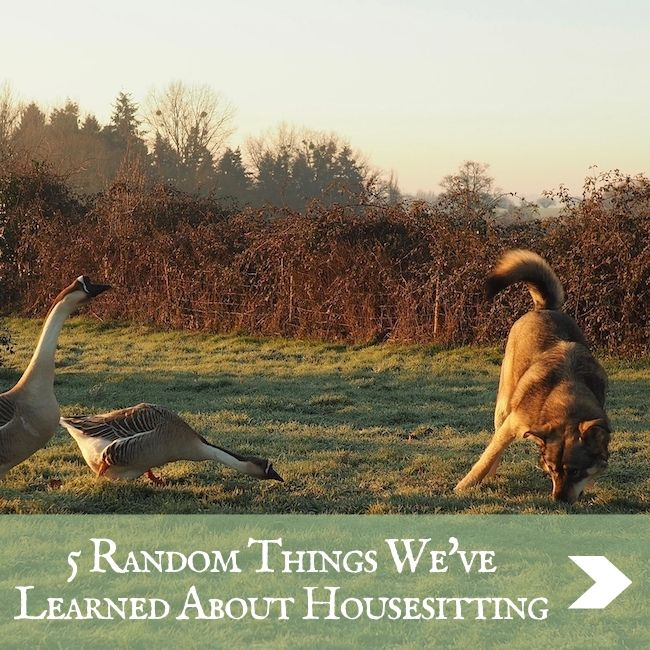 HOUSESITTING - 5 THINGS