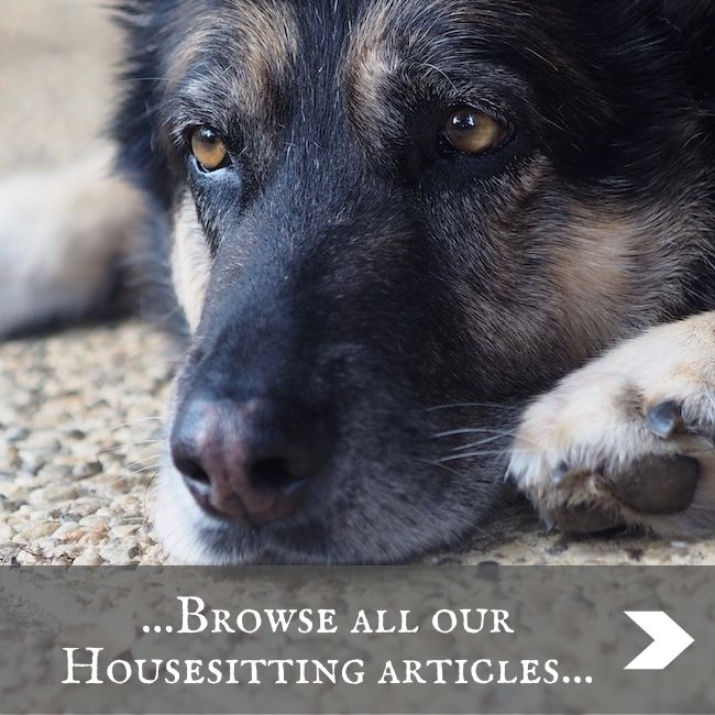 HOUSESITTING - home page