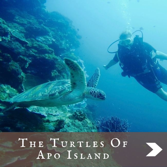 PHILIPPINES - Apo Island