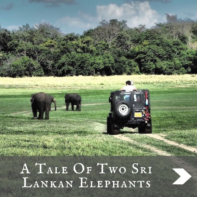 SRI LANKA - Tale of 2 Elephants