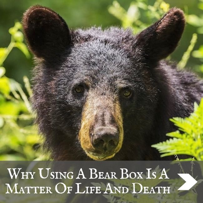 USA - Bear boxes