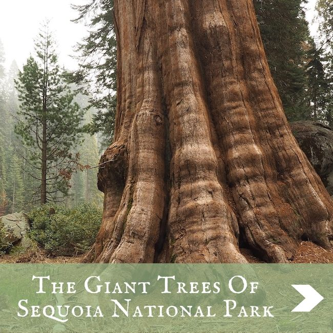 USA - Sequoia National Park